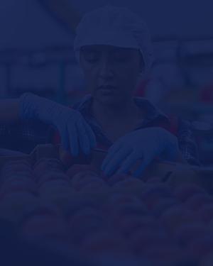 Una empleada uniformada coloca unas frutas en una caja.